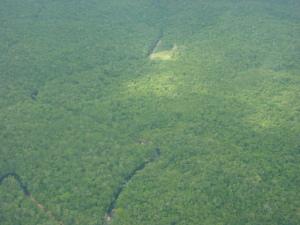 Altra immagine della foresta amazzonica